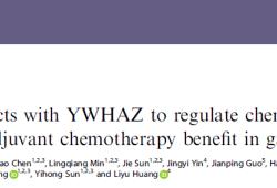 Br J Cancer:G3BP1與YWHAZ表達水平:胃癌化療耐藥性及療效的預測指標