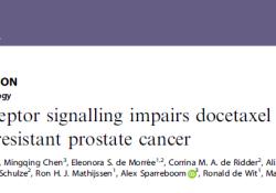 "Br J Cancer:<font color=""red"">雄激素</font>受体信号减弱多西他赛对去势抵抗性前列腺癌的治疗效果"