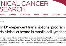 Clin Cancer Res:细胞周期蛋白D1依赖性转录程序可预测套细胞淋巴瘤患者的临床预后