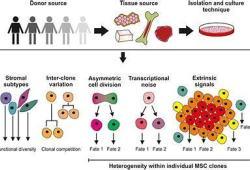 HFSA 2020:基质细胞疗法在治疗蒽环类药物引起的心肌病方面显示出希望