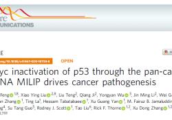 "Nat Commun:c-Myc激活泛癌表达的lncRNA MILIP<font color=""red"">失</font><font color=""red"">活</font>p53并诱导癌症的发生"