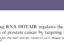 Br J Cancer:LncRNA HOTAIR通过靶向hepaCAM促进前列腺癌的侵袭和转移