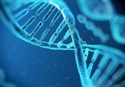 "<font color=""red"">IBD</font>:TGFβ1和IL-6基因中的 CpG甲基化是区分<font color=""red"">儿童</font>CD与UC的良好生物标志物"