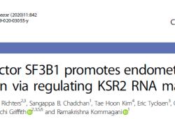Cell Death Dis:SF3B1调节KSR2 mRNA的成熟促进子宫内膜癌的发生发展