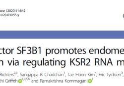 """Cell Death Dis:SF3B1调节KSR2 mRNA的成熟促进<font color=""""red"""">子宫</font><font color=""""red"""">内</font><font color=""""red"""">膜</font><font color=""""red"""">癌</font>的发生发展"""