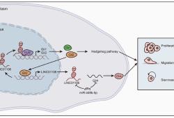 Cell Death Dis:LncRNA LINC01106通过介导正反馈回路促进结直肠癌的发生发展