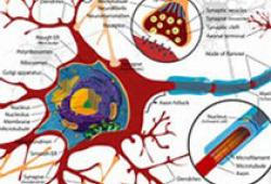 Lancet Neurol:高剂量生物素对进行性多发性硬化症患者残疾进展的影响