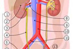 JAMA:局部枸橼酸盐vs全身肝素抗凝对持续肾脏替代治疗过滤器寿命及患者死亡率的影响