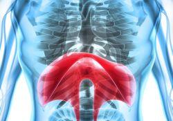"""AP&T:患有非酒精性脂肪肝的<font color=""""red"""">肥胖</font>和非<font color=""""red"""">肥胖</font>受试者的脂质组学的改变"""