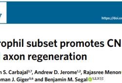 Nat Immunol:科學家發現一種新型細胞,可促進中樞神經系統再生!