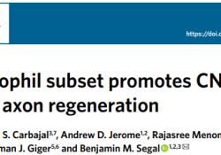"""Nat Immunol:科学家发现一种新型细胞,可促进<font color=""""red"""">中枢</font><font color=""""red"""">神经</font><font color=""""red"""">系统</font>再生!"""