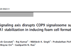 "Cell Death Differ:凝血酶破坏ABCA1与CSN3相互作用诱导<font color=""red"">动脉</font><font color=""red"">粥样硬化</font>的发生"