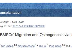 "Cell Transplant:研究揭示αCGRP影响BMSCs迁移和<font color=""red"">成</font><font color=""red"">骨</font>的机制"