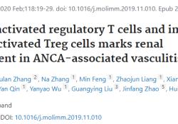 "Mol Immunol:研究揭示Treg细胞在<font color=""red"">ANCA</font><font color=""red"">相关</font><font color=""red"">血管</font><font color=""red"">炎</font>中的作用机制"
