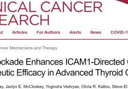 """Clin Cancer Res:阻断PD<font color=""""red"""">1</font>可增强ICAM<font color=""""red"""">1</font>靶向CAR T细胞治疗晚期甲状腺癌的疗效"""