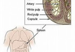 """ATVB:<font color=""""red"""">肝脏</font>甘油三酯含量与凝血因子之间的关联"""