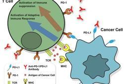 SITC 2020:接受免疫疗法的癌症患者罹患COVID-19的风险并不高