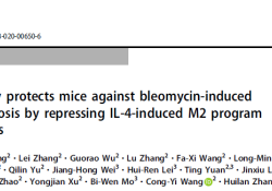 """Cell Death Differ:<font color=""""red"""">IL</font>-24缺失抑制<font color=""""red"""">IL</font><font color=""""red"""">-4</font>诱导的巨噬细胞M2型转化以预防肺纤维化作用"""