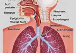 "Eur Respir J:<font color=""red"">二</font><font color=""red"">氧</font><font color=""red"">化</font>氮增加特发性肺纤维化患者死亡风险"