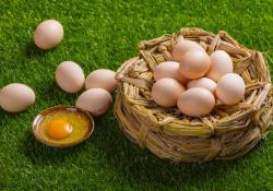 "Clin<font color=""red"">Nutrition</font>:鸡蛋和鸡蛋来源的胆固醇消耗与死亡率的关系"