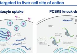 """无论年龄和性别,诺华靶向<font color=""""red"""">PCSK</font><font color=""""red"""">9</font>的siRNA疗法均可在17个月内持续有效降低LDL-C"""