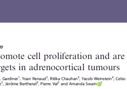 """Br J Cancer:HOX基因:<font color=""""red"""">肾上腺</font><font color=""""red"""">皮质</font>癌的潜在治疗靶标"""