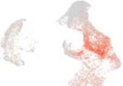 "Circulation:<font color=""red"">单细胞</font><font color=""red"">测序</font><font color=""red"">揭示</font>平滑肌<font color=""red"">细胞</font>在动脉粥样硬化过程中的转化及<font color=""red"">治疗</font>靶点"