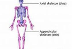 2020 ASSET共识声明:解剖型全肩关节置换术的康复治疗