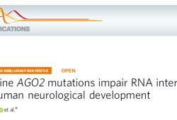 Nat Commun:AGO2突变影响RNA干扰和人类神经发育