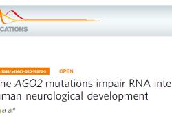 "Nat Commun:AGO2突变影响RNA干扰和人类神经<font color=""red"">发育</font>"