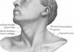 "2020 EHNS/ESMO/ESTRO临床实践指南:口腔、<font color=""red"">喉</font>、口咽和下咽鳞状细胞癌的诊断,治疗和随访"