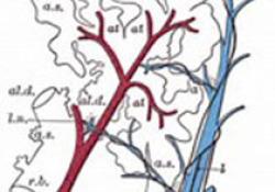 """动静脉畸形诊断与<font color=""""red"""">介入</font><font color=""""red"""">治疗</font>专家共识"""