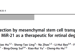 "Cell Death Differ:间充质干细胞移植技术揭示<font color=""red"">外</font><font color=""red"">泌</font><font color=""red"">体</font>miR-21或可成为视网膜变性的潜在治疗靶标"