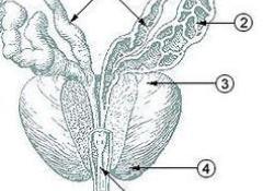 "NMPA批准XTANDI(恩<font color=""red"">杂</font>鲁胺软胶囊)治疗<font color=""red"">非</font>转移性去势抵抗性前列腺癌"