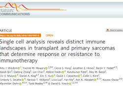 "Nat Commun:单细胞<font color=""red"">分析</font>揭示移植瘤<font color=""red"">和</font>原发性肉瘤的不同免疫状况并影响免疫疗法的效果"