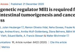 "NAT COMMUN:表观调节剂Mll1驱动肠道肿瘤发生和<font color=""red"">干性</font>"