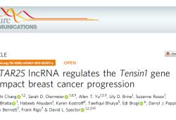 Nat Commun:lncRNA MaTAR25通过调控Tns1基因影响乳腺癌的发生发展