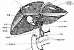 经皮肝穿刺胆道引流术管路护理专家共识