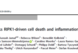 Cell Death Differ:扑米酮Primidone有效抑制RIPK1驱动的细胞死亡和炎症反应