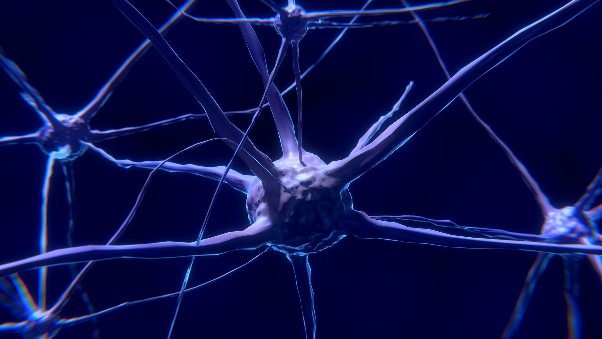 """CELL REP:""""心腦相連"""",心跳期間神經元的波形變化"""