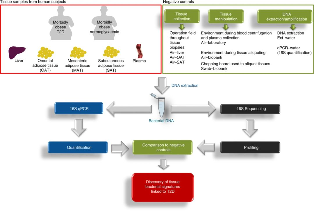 Nature Metabolism: T2D影响肥胖者的菌群分布