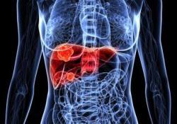 "Dig <font color=""red"">Liver</font> Dis:肝移植对小儿慢性肝病中脂溶性维生素缺乏的影响"