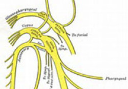"NEJM:Selumetinib用于无法手术的I型丛状神经<font color=""red"">纤维</font><font color=""red"">瘤</font>的治疗"