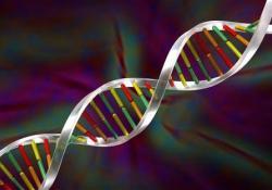 "JCC:MicroRNA23a在克罗恩病中的过度表达增加了抗TNF的敏感性并保护了<font color=""red"">上皮</font><font color=""red"">屏障</font>"