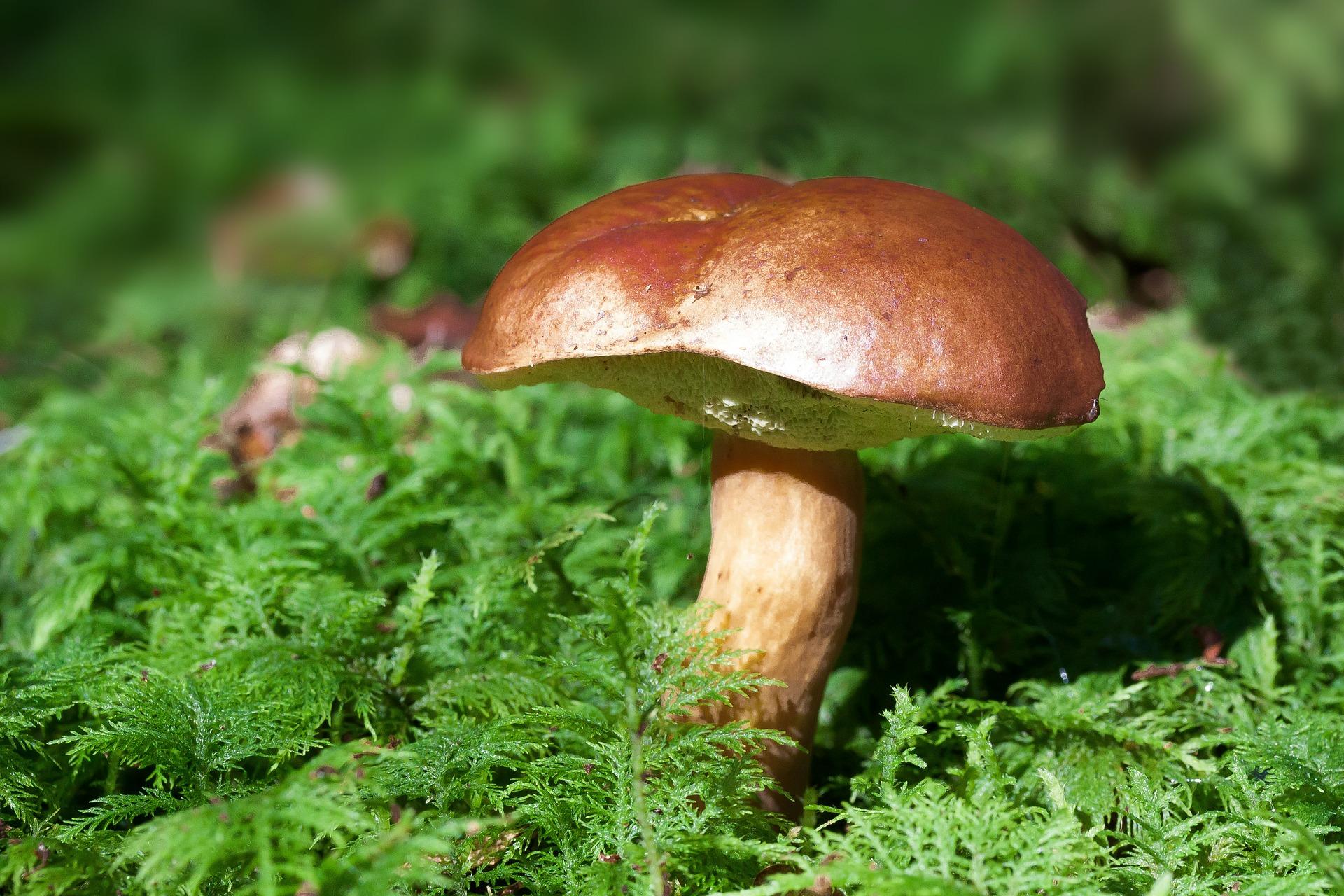 NATURE:微生物代谢膳食果糖,促进肝脏脂肪生成