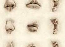 Front Neurosci:香烟烟雾对鼻呼吸道和嗅觉粘膜影响研究