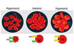 """NEJM:Luspatercept用于治疗输血依赖<font color=""""red"""">型</font>β<font color=""""red"""">地中</font><font color=""""red"""">海</font><font color=""""red"""">贫血</font>"""