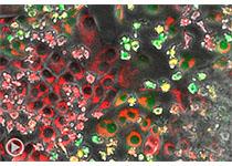 Nature:【突破】500,000+单细胞的RNA序列揭示所有主要人体器官的细胞类型图