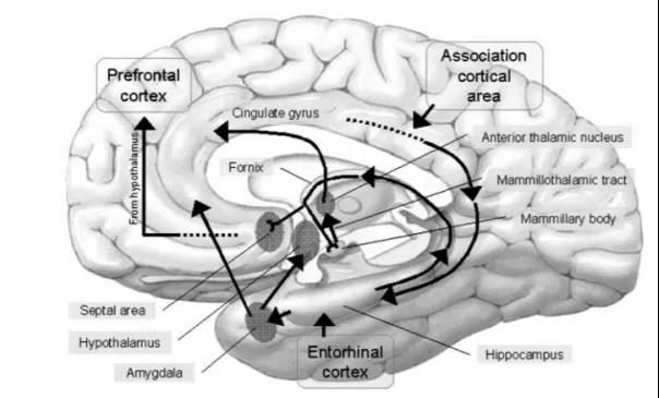 这个部位发生脑梗死,患者可能会失忆,你见过吗?