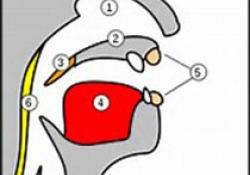 【盘点】近期鼻炎研究进展